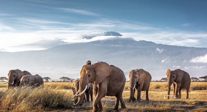 Tour and Holiday Packages to Kenya