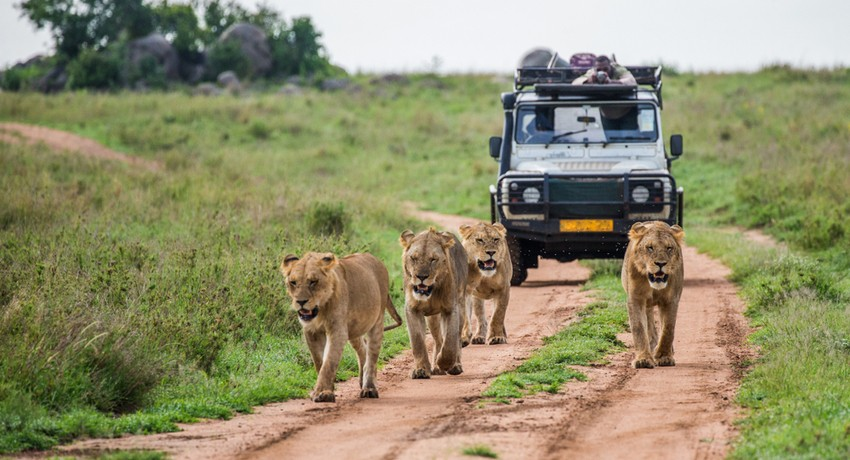 Holiday Packages to Kenya from Dubai