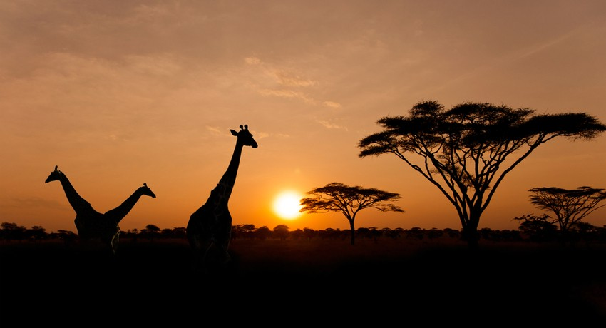 Tour Packages to Tanzania from Dubai